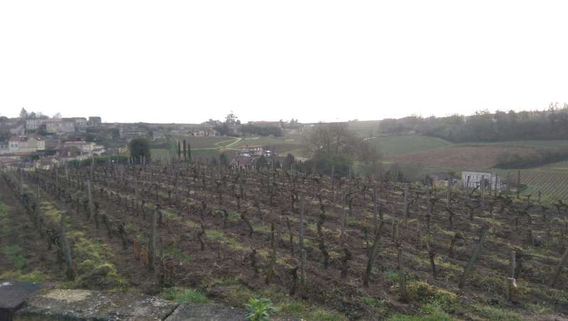Looking out over St Emilion