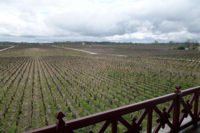 The view of the vineyards from the Pontet Canet tasting room