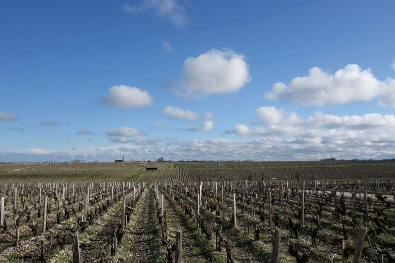 The vineyards at Chateau Latour