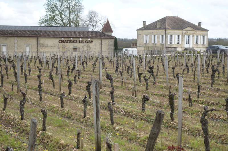 The vineyards at Chateau Le Gay